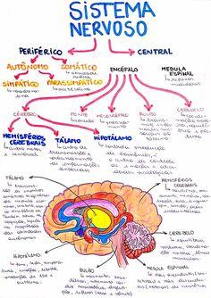 Mapa Mental de Biologia : Sistema Nervoso