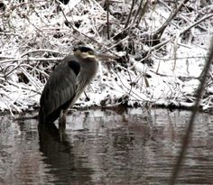 first snow fall First Snow, Bird, Fall, Photos, Animals, Autumn, Pictures, Animales, Fall Season