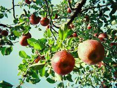 Fall Recipes | Quinoa Porridge with Apple Compote