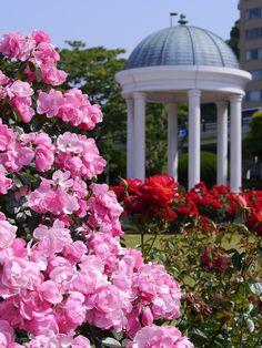 France, Verny Park, France, Rose, Pink, Red, Sea #france, #vernypark, #france, #rose, #pink, #red, #sea