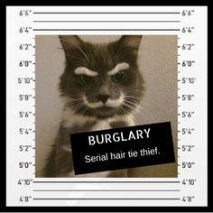 36 Best CATS-Mugshots images in 2018 | Funny cats, Funny kitties