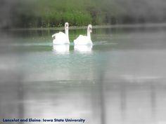 Lake Laverne, Iowa State University
