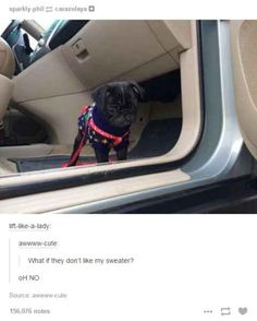 This pug understands the struggle of being human // 30 Tumblr Posts About Animals That Will Leave You Laughing - BlazePress