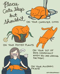 Unusual places are the best places to sleep. | 36 Illustrated Truths About Cats