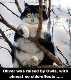 Oliver the cat was raised by owls.