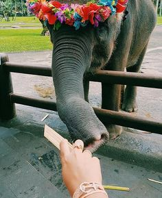 take me to these amazing & beautiful creatures 🐘💕🐘 Cute Creatures, Beautiful Creatures, Animals Beautiful, Cute Baby Animals, Animals And Pets, Funny Animals, Wild Animals, Animal Pictures, Cute Pictures