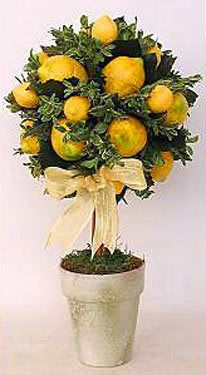Another lemon topiary