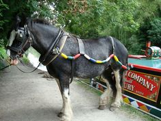 this fabulous gent is hitchin' it old style! before narrow boats had motors, horses walked alongside the canals and pulled them along. Canal Barge, Canal Boat, Shire Horse, My Horse, All About Horses, Narrowboat, Clydesdale, Draft Horses, Horse Drawn