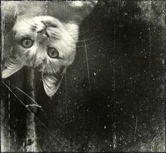 by xxfromneptune . Animal Pictures, Cute Pictures, Cute Cats, Funny Cats, Big Friends, Batman, Pics Art, Four Legged, Cat Life