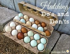 Do's and Don'ts when selecting hatcing eggs