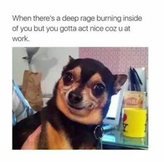 Here are 10 hilarious memes this week that were trending on social media. Funny Cute, The Funny, Funny Shit, Hilarious, Funny Stuff, Memes Humor, Funny Memes, Funny Animal Pictures, Dog Humor