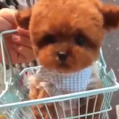 Really Cute Puppies, Cute Baby Dogs, Cute Little Puppies, Cute Funny Dogs, Cute Dogs And Puppies, Cute Funny Animals, Little Dogs, Cute Baby Animals, Cute Cats