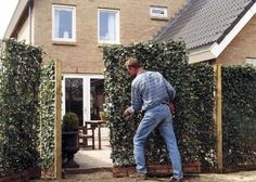 ivy fence panels - Google Search