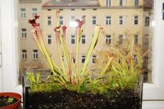 Bad, Sweet Home, People, Plants, Carnivorous Plants, Botany, Living Room, Lawn And Garden, Pictures