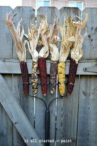 Indian Corn Rake