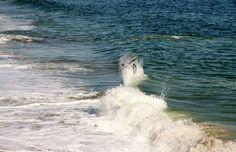USA.Wybrzeże  na Oceanem Atlantyckim. Północna Karolina-Wilmington. Grudzień.