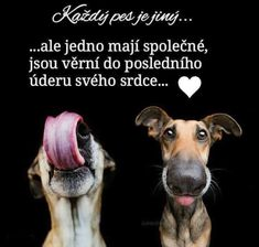 Dog Quotes Love, Belgian Malinois, English Words, True Words, Animals And Pets, Quotations, Best Friends, Sad, Writing
