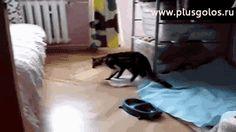 Пьяный кот | Смех сквозь хохот