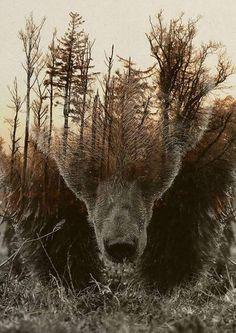 Bear spirit totem, trees