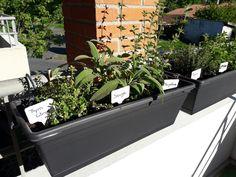 Jardinières de plantes aromatiques