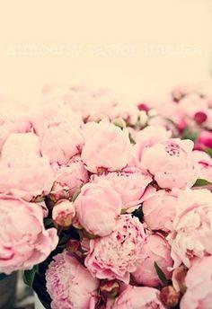 Favorite flower... pink peonies ♥