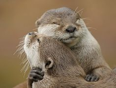 Have I mentioned the awesome hugs? | 20 Unconventional Reasons To Be Friends With Otters