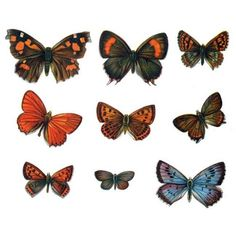 Vintage Styled Butterfly Vinyl Decals Set 2 by WilsonGraphics, $17.00