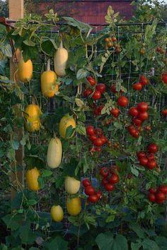 Die 96 Besten Bilder Von Vertikale Gärten In 2019 Gutter Garden