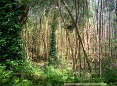 Forest spiral, Soni Alcorn-Hender