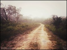 The road ahead is clear.  #australia #tree #landscape #fog #nature #wood #road #dawn #mist #outdoors #sky #environment #season #scenic #fall #guidance #travel #traveling #visiting #instatravel #instago #sunset #weather #park