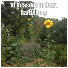 The Green Phone Booth: 10 Reasons to Start Gardening