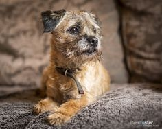 Myrtle - Myrtle is our friends border terrier. She is a real poppet.