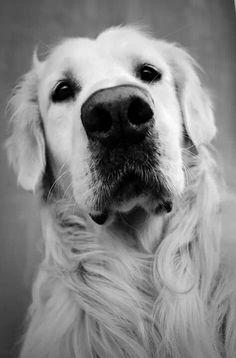 Adorable face!