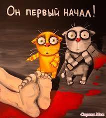 Картинки по запросу картинка котята с надписью простите