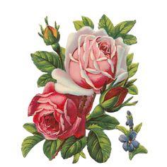 Resultado de imagen de imagenes png de flores