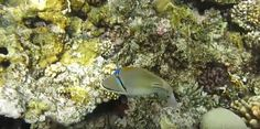 Coral Reef Pictures, Fish, Pets, Animals, Animales, Animaux, Pisces, Animal, Animais