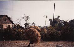 Zo vervoeren vrouwen in Nepal stro van het land naar de stal
