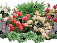 Другие цветы в схеме розария