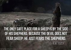A W Tozer: the only safe place for a sheep is by the side of his Shepherd