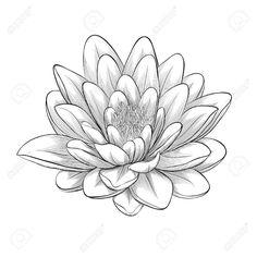 Schöne Schwarz-Weiß, Schwarz Und Weiß Lotusblüte In Grafik-Stil Isoliert Auf Weißem Hintergrund Gemalt Lizenzfrei Nutzbare Vektorgrafiken, Clip Arts, Illustrationen. Image 27375680.