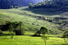 Marosfő Fodor István -fotó Golf Courses, Mountains, World, Basin, Nature, Travel, Naturaleza, Viajes, Destinations