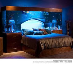 """Aquarium Bed.  From Beth: """"Miranda, I do solemnly swear that once I am rich and/or famous I will buy this for you as a birthday gift.  You're welcome in advance."""""""