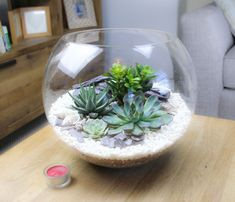 Extra Large Glass Globe Terrarium with 4 Succulent Plants - The Art of Succulents Large Terrarium, Glass Terrarium, Succulent Terrarium, Terrarium Kits, Large Succulent Plants, Succulent Arrangements, Planting Succulents, White Gravel, Plant Projects