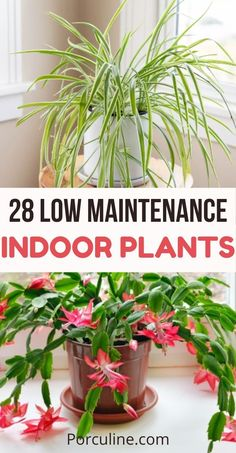 28 Gorgeous Indoor Plants That Actually Easy to Care for - Porculine