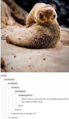 Marine animals are made of blorp and squish