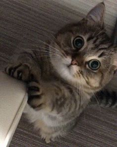 Cute Animals Names To Call Your Boyfriend Funny Cat Videos, Funny Cat Pictures, Funny Cats, Animals And Pets, Baby Animals, Cute Animals, Fluffy Animals, Cute Kittens, Cats And Kittens