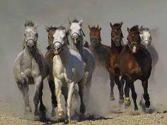 Manada de caballos en movimiento.
