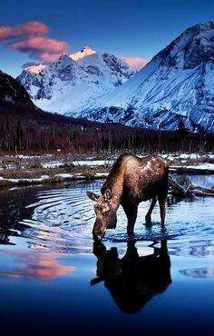 #Alaska