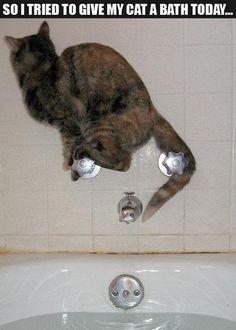Katze turnt auf Armaturen herum :-) ( Wasserhahn / Bild nicht von DIBL' Armaturen - Alle Rechte dem Anbieter des Bildes - Siehe Quelle )