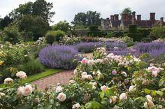 English garden roses Borde Hill Gardeen